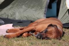 Camping (10. bis 12.06.2016)