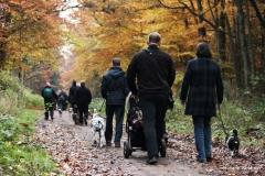Herbstwanderung (01.11.2015)