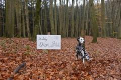 Herbstwanderung (17.11.2013)